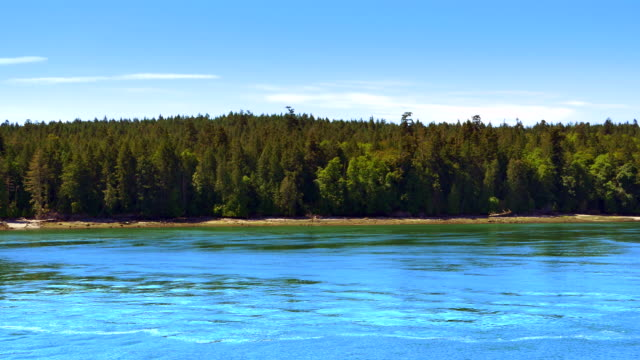 Aerial View of Island Forest Landscape, Water Coastline Beach video