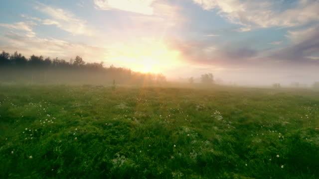 flygfoto över sjön vid soluppgången, flyga över morgondimman vid sjön. - finland bildbanksvideor och videomaterial från bakom kulisserna
