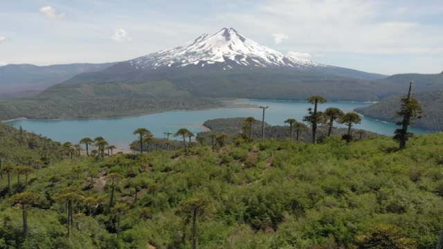 Aerial view of Llaima Volcano and Conguillio Lake in Conguillio National Park Elevated view of Llaima Volcano and Conguillio Lake inside Conguillio National Park in Araucania region, southern Chile south stock videos & royalty-free footage
