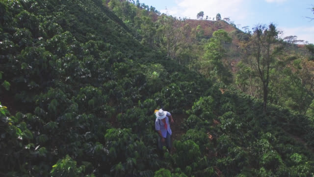 aerial view of male farmer fumigating the coffee crop - coffee farmer video stock e b–roll