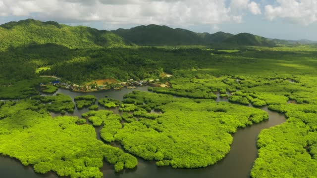 Aerial view of mangrove forest and river on the Siargao island. Mangrove jungles, trees, river. Mangrove landscape. Philippines. Aerial view of mangrove forest and river on the Siargao island. Mangrove jungles, trees, river. Mangrove landscape. Philippines. coastal feature stock videos & royalty-free footage