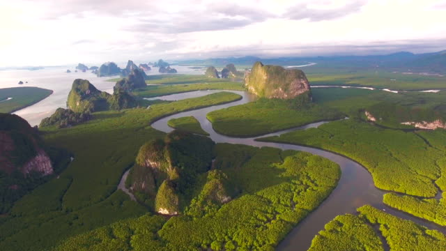 aerial view of mangrove forest in thailand, phang-nga province, flying over mangrove forest with beautiful sunlight in the morning - река стоковые видео и кадры b-roll
