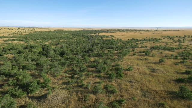 vídeos de stock e filmes b-roll de aerial view of masai mara - quénia
