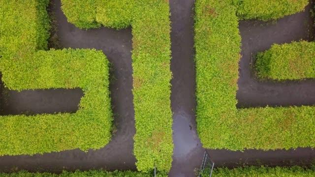 vidéos et rushes de vue aérienne du labyrinthe, labyrinthe vert dans le parc - haie