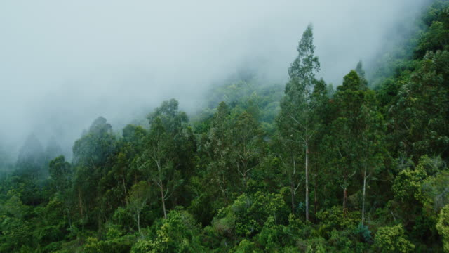 aerial view of misty forest - trees in mist stock videos & royalty-free footage