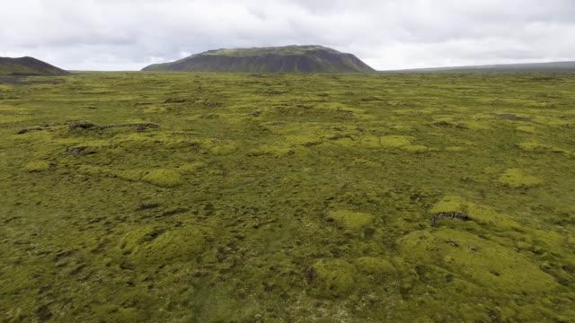 Vista aérea del campo de lava musgo en Islandia. - vídeo