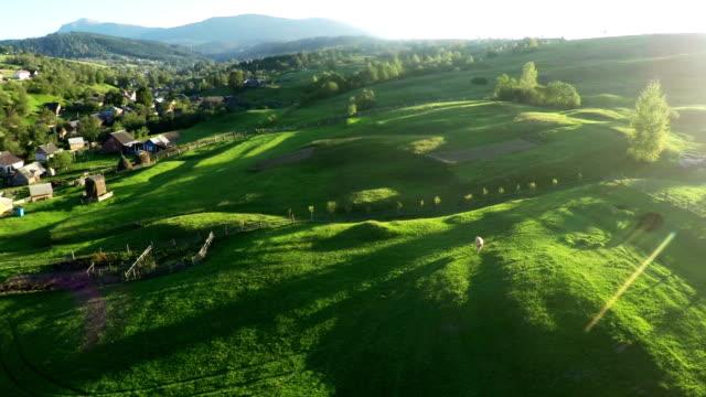 aerial view of mountain hills - ukraina filmów i materiałów b-roll