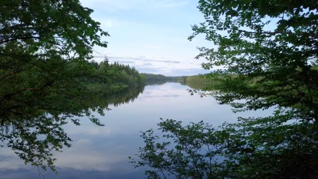 鳥瞰圖的自然森林和河流在夏天 - 河 個影片檔及 b 捲影像