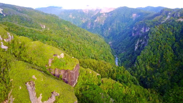 Aerial view of New Zealand tree fern forest wilderness video