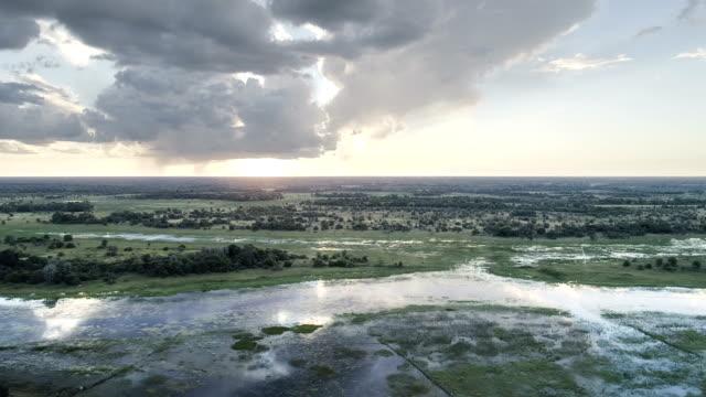 Aerial view of Okavango swamp Drone view of large swamp. Okavango Delta in Namibia namibia stock videos & royalty-free footage