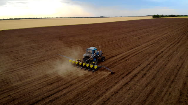 Aerial view of old blue tractor is sowing grain seeds in big brown field Aerial view of old blue tractor is sowing grain seeds in big brown field. Drone shoots video planting grain agricultural machinery in soil monoculture stock videos & royalty-free footage