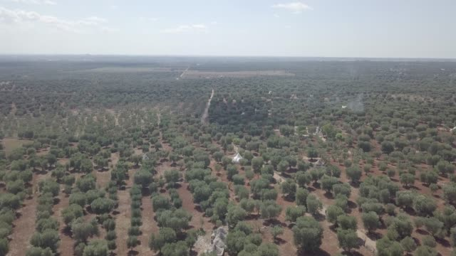 aerial view of olive grove on red soil with trullo trulli - traditional italian white stone houses in puglia region. rural landscape village countryside summer. south italy europe. agricultural field - white house filmów i materiałów b-roll