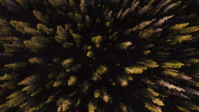 aerial view of oregon forest - inarcare la schiena video stock e b–roll