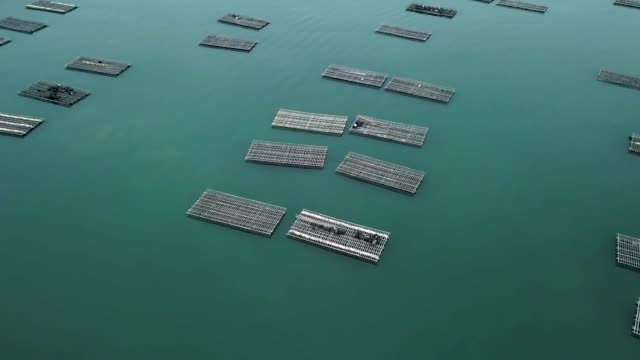 Aerial view of Oyster traps