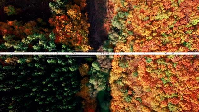 aerial view of people walking on suspension footbridge geierlay (hängeseilbrücke geierlay), germany - lungo video stock e b–roll