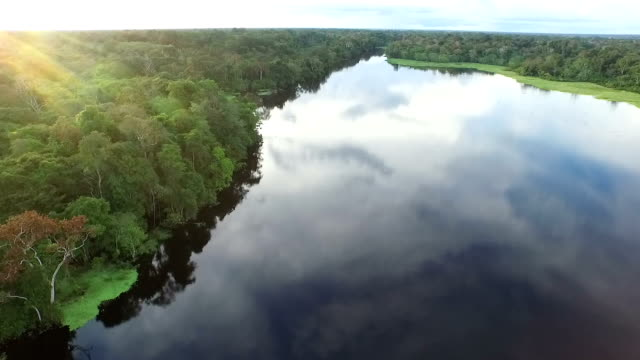 Aerial View of Peruvian Amazon and Jungle and inland lake video