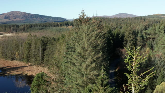 Aerial view of pine forest and a slow moving river in rural Dumfries and Galloway captured in early autumn 4K drone footage of a rural scene with a river and pine forest in south west Scotland on a bright sunlight autumn morning galloway scotland stock videos & royalty-free footage