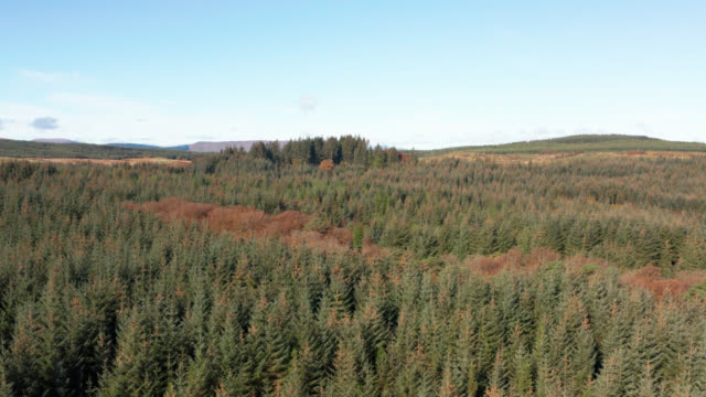 Aerial view of pine forest in Dumfries and Galloway