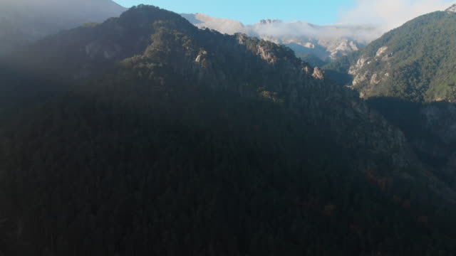 flygfoto över pinjeskog och berg på morgonen - städsegrön växt bildbanksvideor och videomaterial från bakom kulisserna