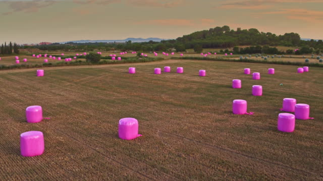 Aerial view of pink haybales on a harvested field video