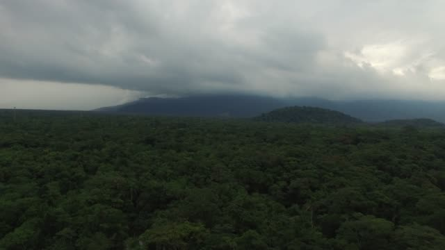 Aerial View of Rainforest in Brazil video