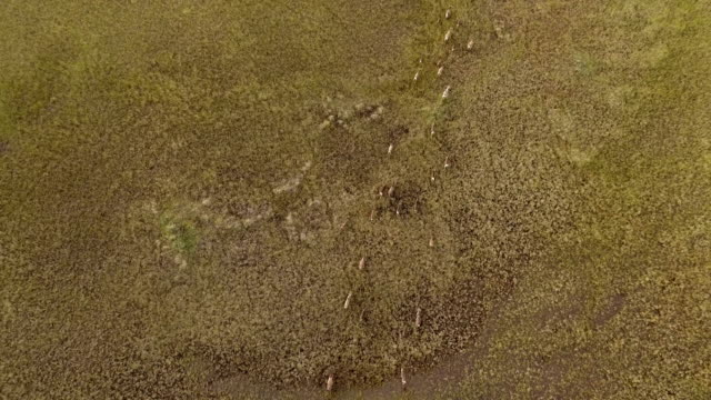 Aerial view of reindeer running in Tundra video