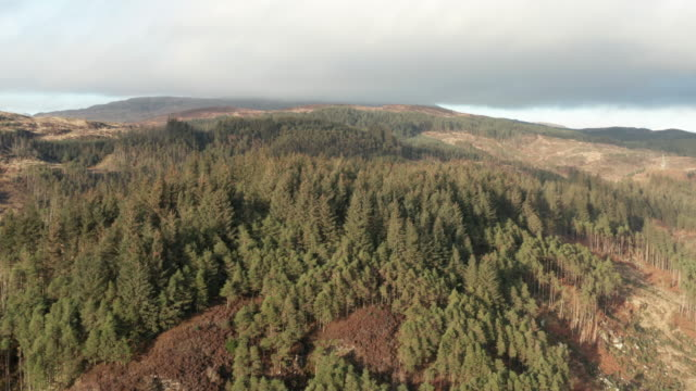 Aerial view of remote area of rural Dumfries and Galloway with pine forest growing on a hillside 4K drone footage of remote countryside in rural south west Scotland. This part of the country is used for pine forestry. galloway scotland stock videos & royalty-free footage