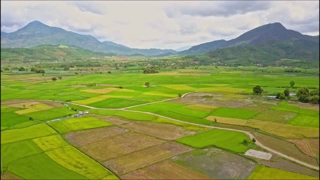 Aerial View of Rice and Lotus Fields against High Mountains