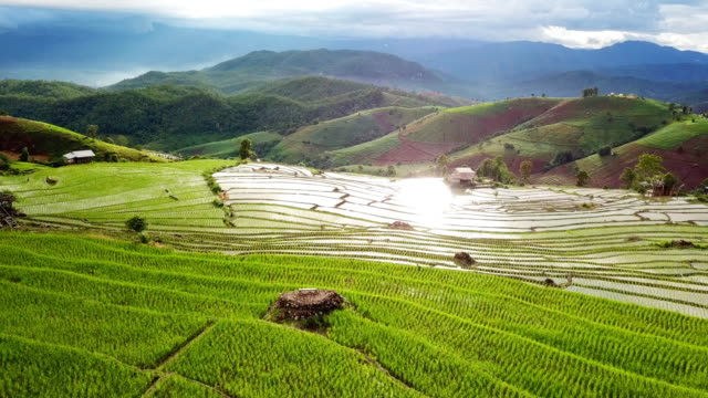 Aerial view of Rice field Terraces panoramic on hillside , Agriculture of southeast asia