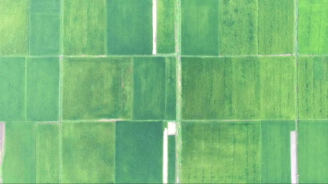 aerial view of rice paddy - pezze di stoffa video stock e b–roll