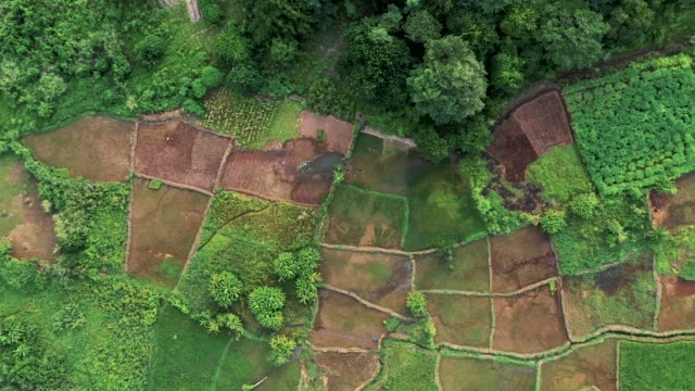Aerial view of Rice plantation in Malawi, Africa
