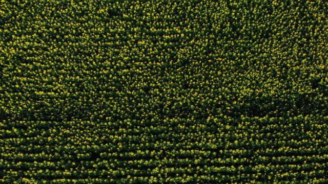 vidéos et rushes de vue aérienne de la route dans les champs. vue aérienne de la route dans les champs verts. - maïs culture