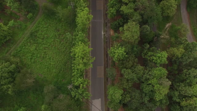 Aerial view of road in the forest video