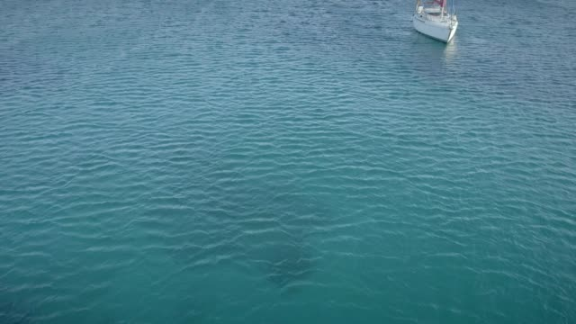 aerial view of sailboats sailing cross blue and clean sea in greece. - isole egee video stock e b–roll