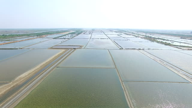 aerial view of salf farm in samuthsongkram central of thailand video