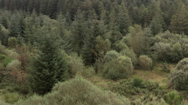 Aerial view of Scottish woodland 4K drone footage of Scottish forestry in a remote rural setting galloway scotland stock videos & royalty-free footage