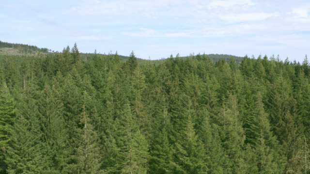 aerial view of scottish woodland - jodła filmów i materiałów b-roll
