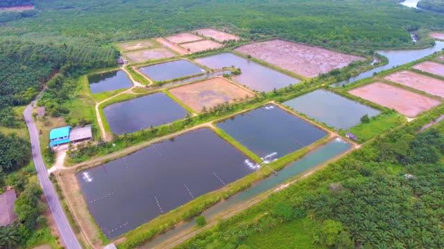 Aerial View of Shrimp Farm in Rural Area video