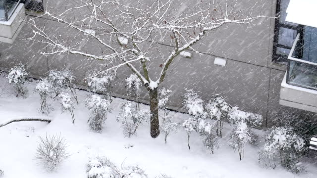 Aerial view of small parterre on cold blizzard snow winter day – Video