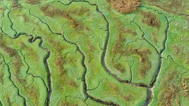 luftaufnahme des kleinen bach überqueren feuchtgebiet, niederlande. - aerial overview soil stock-videos und b-roll-filmmaterial