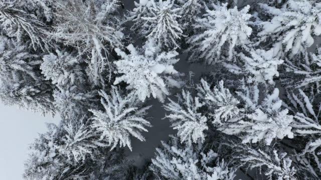 雪の空撮覆われて山の松林 - チロル州点の映像素材/bロール