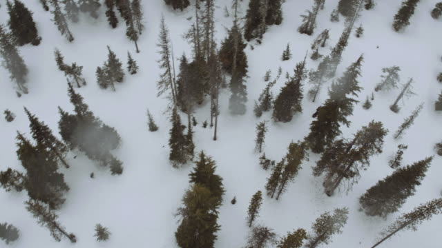 Aerial view of snowmobiles in the woods video