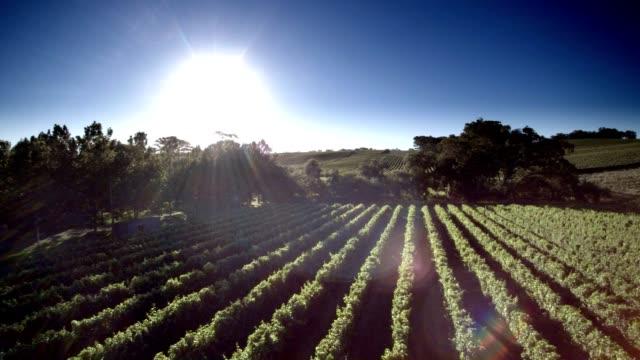 Aerial View of South Australian Vineyard video