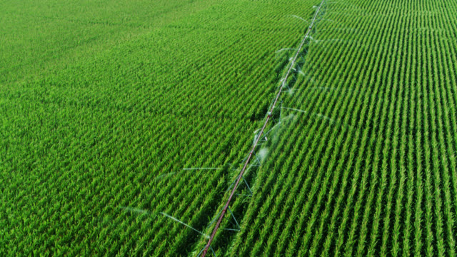 Aerial View of Sprinkler Watering Corn