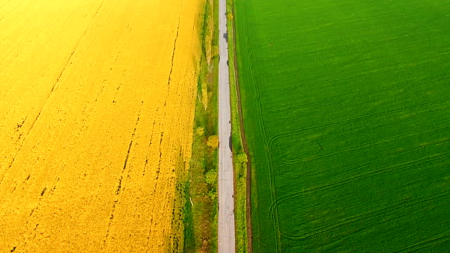Aerial view of suburban road between colza and wheat fields video