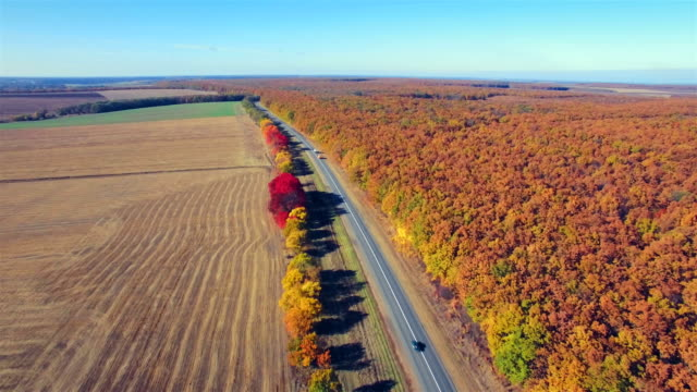 Aerial view of suburban road between field and forest video