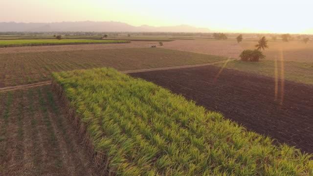aerial view of sugar cane organic farm with beautiful sunlight - сахарный тростник стоковые видео и кадры b-roll