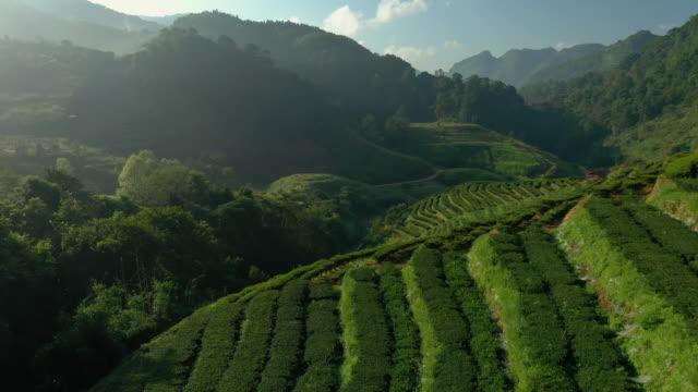 vídeos de stock, filmes e b-roll de vista aérea do terraço da plantação de chá na montanha - plantação