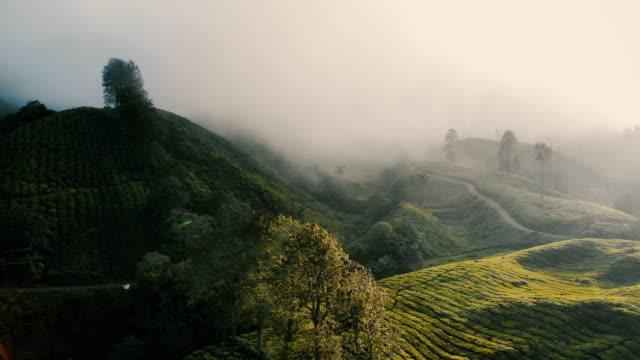 luftaufnahme von teeplantagen bei sonnenaufgang - grüner tee stock-videos und b-roll-filmmaterial