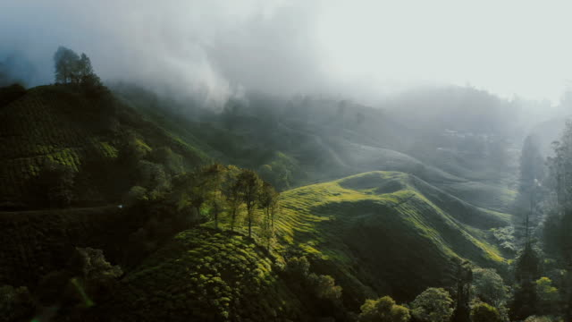 aerial view of tea plantations at sunrise - malese video stock e b–roll